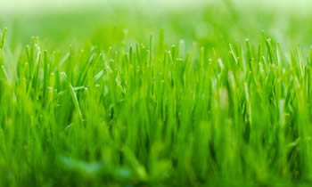 Lawn Service in Harrisburg PA Lawn Care in Harrisburg PA Lawn Mowing in Harrisburg PA Lawn Professionals in Harrisburg PA
