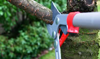 Tree Pruning Services in Harrisburg PA