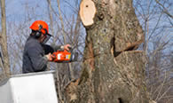 Tree Removal in Harrisburg PA